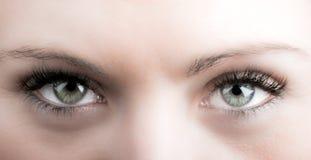Ögon och långa ögonfrans royaltyfri bild