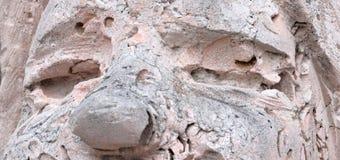 Ögon och näsa av en stenman forntida fossil Textur av det rosa skalet vaggar detaljerad verklig sten f?r bakgrund mycket arkivfoton