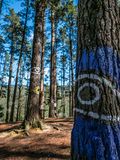 Ögon på träden, Oma skog arkivbild