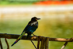 ögonblick av fred för älskvärd fågel på vårdag Arkivbilder