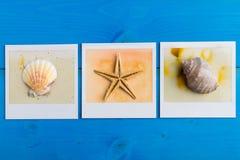 Ögonblickliga ramar av sjöstjärnan och snäckskal Royaltyfri Bild