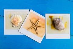 Ögonblickliga ramar av sjöstjärnan och snäckskal Royaltyfria Bilder