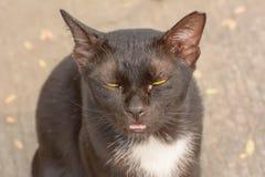 Ögonboogers i katter royaltyfria bilder