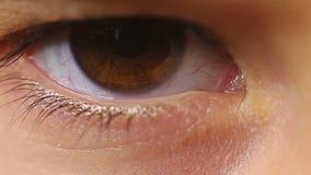 Ögonfrans för blinka för öga för makrobarnnärbild arkivfilmer