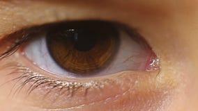 Ögonfrans för blinka för öga för makronärbildbarn stock video