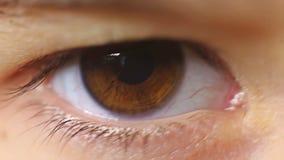 Ögonfrans för blinka för barn för makronärbildöga stock video
