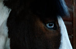 ögonhäst s Arkivfoton