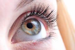 ögonkvinnor Arkivfoto
