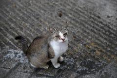 Ögonurladdning i katter Arkivbild