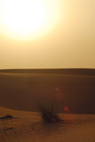 öken arkivfoton