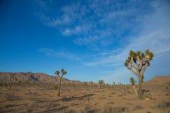 Öken av Joshua Tree National Park, Kalifornien med träd Arkivbilder