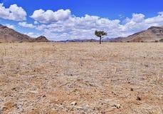 Öken av namib med orange dyn Royaltyfri Bild