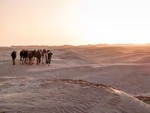 Öken av Sahara på Douz i den Tunisien husvagnen av kamel på Royaltyfri Foto