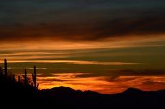 Öken Dreamtime, Saguarovaktposter, Saguaronationalpark, Sonoran öken Arkivbilder