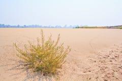 Öken eller Sahara Arkivfoton
