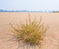Öken eller Sahara Royaltyfri Bild