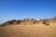 Öken framme av bergen Arkivbild