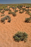Öken i Arizona Royaltyfri Bild