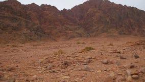 Öken i Egypten, sand och berg lager videofilmer