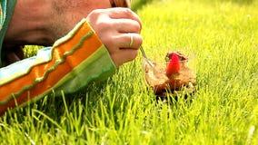 Öken i gräset stock video