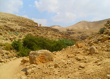 Öken i Israel Royaltyfria Foton