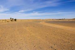 öken morocco sahara Royaltyfri Fotografi