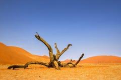 öken namibian arkivbilder