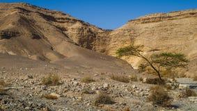 Öken Negev i Israel Royaltyfria Bilder