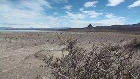 Öken på kustlinje av havet i Argentina lager videofilmer