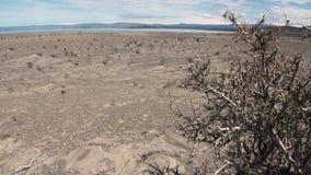 Öken på kustlinje av havet i Argentina stock video