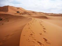 Öken på Merzouga, Marocko Royaltyfri Foto