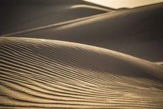 Öken Safari Dubai Royaltyfri Fotografi