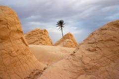 Öken Sahara Royaltyfria Bilder