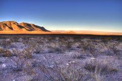 Öken västra Texas, USA Fotografering för Bildbyråer