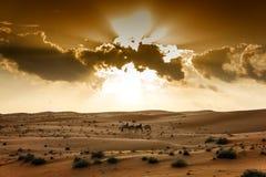 Öken Wahiba Oman Royaltyfria Bilder