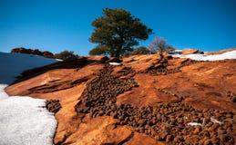 ÖkenBerg-land i vinter Arkivfoto
