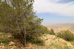 Ökenberglandskap (den flyg- sikten), Jordanien, Mellanösten Arkivbild
