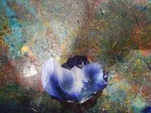 Ökenblomma på abstrakt bakgrund royaltyfri foto