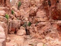 Ökenblommor växer i sprickorna av klipporna Royaltyfria Foton