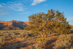 Ökenborste i Utah Arkivfoto