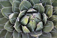 Ökenbotanisk trädgård Phoenix Arizona Arkivbilder