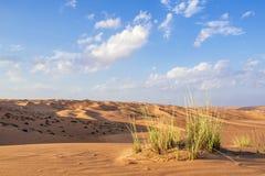 Ökengras Wahiba Oman Arkivfoton
