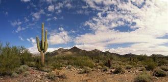 Ökenkaktus och berg Arkivfoto