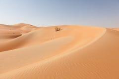 Ökenlandskap i Abu Dhabi Fotografering för Bildbyråer