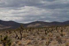 Ökenlandskap i Nevada arkivbilder
