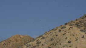 Ökenlandskap med att skjuta i höjden örnar lager videofilmer