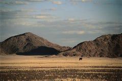 ökenliggande namibia Arkivbild