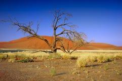 ökennamib namibia Royaltyfri Foto