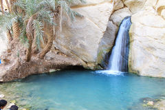 Ökenoas, Chebika, Tunisien Royaltyfria Foton