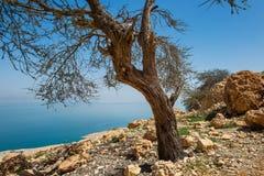 Ökenoas för En Gedi på den västra kusten av det döda havet i Isr Arkivfoton